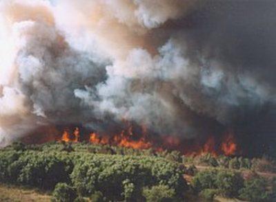 Waldbrandkatastrophe in der Lüneburger Heide